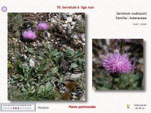 3-Serratula
