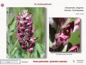 5-CD 100 plantes et 11 patrimoniales
