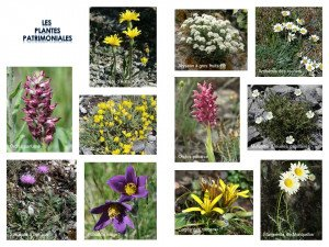 Plantes patrimoniales